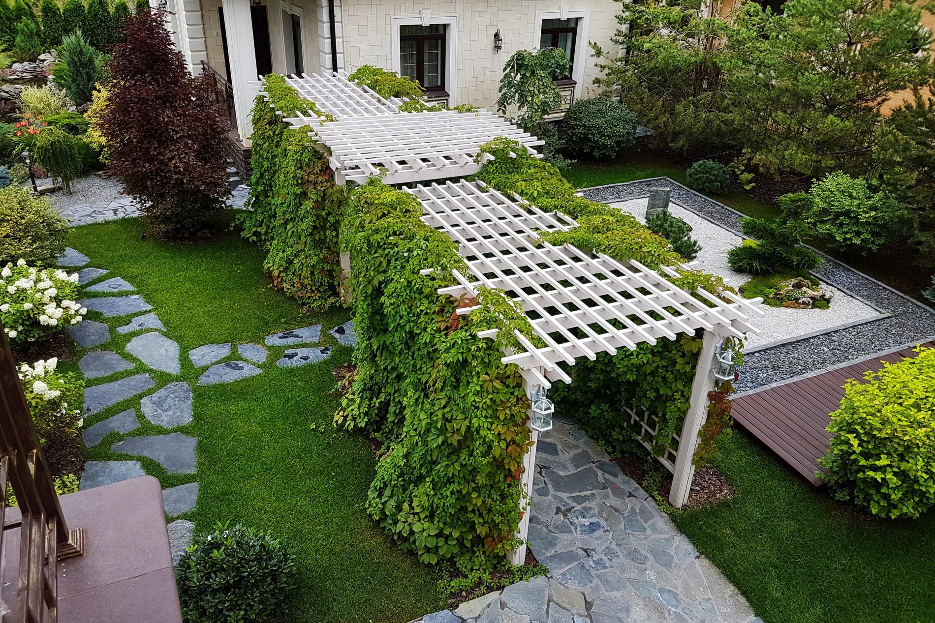 Перголы и дикий виноград в ландшафтном дизайне загородного дома